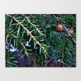 Mini Acorns Canvas Print