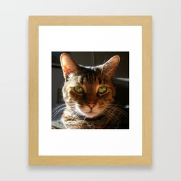 Marley the Mackerel Tabby Cat with Intense Green Eyes Framed Art Print