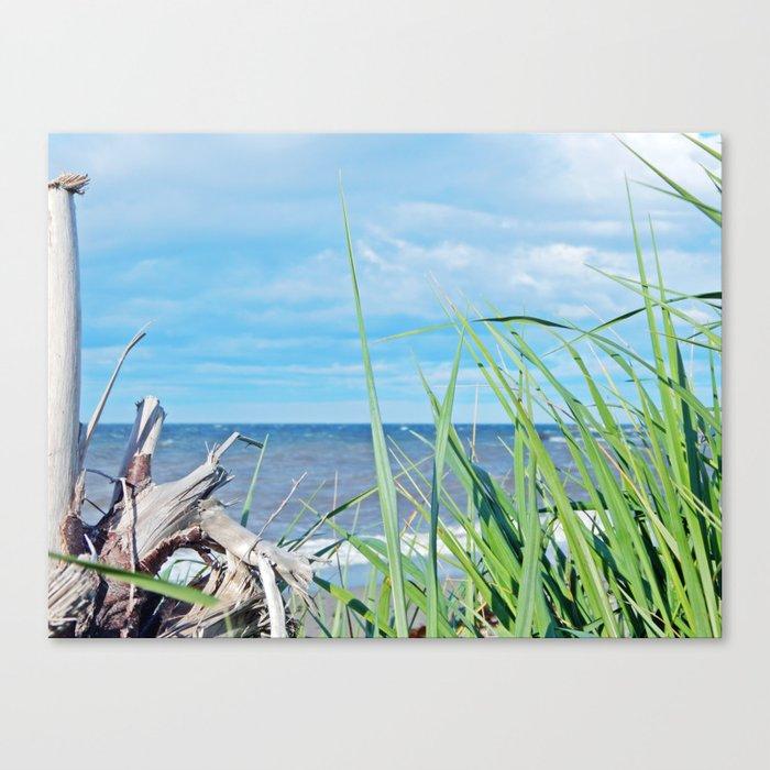 Through Grass and Driftwood Canvas Print