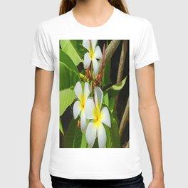 Enchanting Frangipani T-shirt