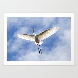 White Heron in Flight Art Print