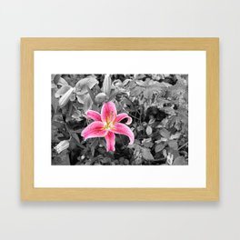Stargazer Lily (Color Accented) Framed Art Print