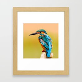 Radiant Bird Framed Art Print