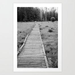 Walkway To The Woods Art Print