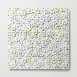 white daisy flowers Metal Print