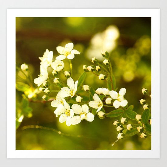Tiny White Flowers Art Print