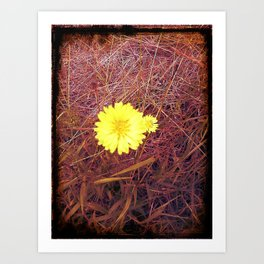 passion..yellow..love..beauty Art Print
