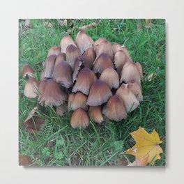 Inky-cap mushroom Metal Print