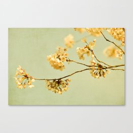 vintage cherry blossoms Canvas Print