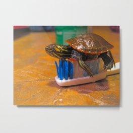 Turtle Brush Metal Print