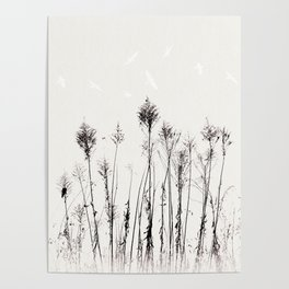 Dried Tall Plants and Flying White Birds Poster