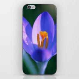 Crocus flowers iPhone Skin