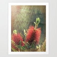 Bottle Brush Plant Art Print