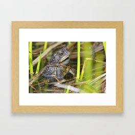Toad in the pond Framed Art Print