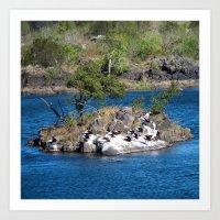 Peaceful Pelicans Art Print