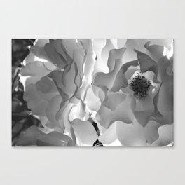 Frill Canvas Print