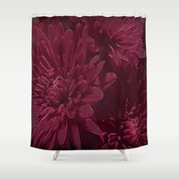 burgundy Shower Curtains featuring Burgundy Chrysanthemums by Judy Palkimas