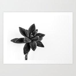 flower cactus Art Print