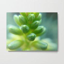 Green plant macro - Greg Katz Metal Print