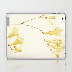 IV. Vintage Flowers Botanical Print by Pierre-Joseph Redouté - Sisyrinchium Collinum Laptop & iPad Skin