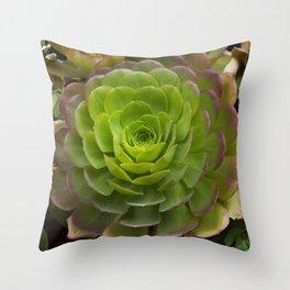 Aeonium virgineum Throw Pillow