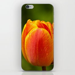 colourful tulips  iPhone Skin