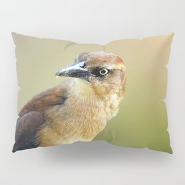 Female Great-tailed Grackle Pillow Sham