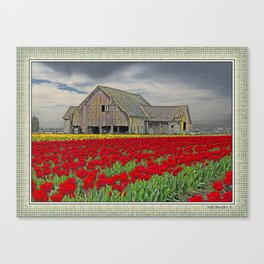 RED TULIPS AND BARN SKAGIT FLATS Canvas Print