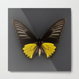 Toides Yellow Butterfly Metal Print