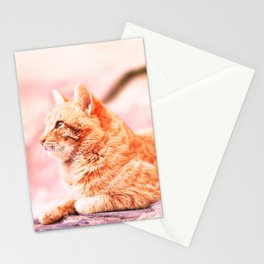 313. The Red Cat, Petra, Jordanie Stationery Cards