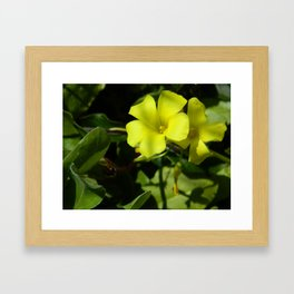 Oxalis Framed Art Print