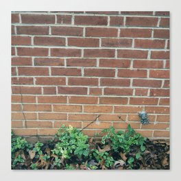 A Brick Wall and Some Plants  Canvas Print