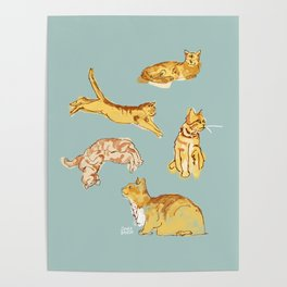 Various cats Poster