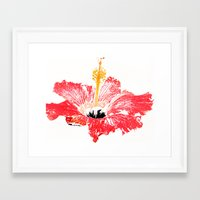 hibiscus Framed Art Prints featuring Hibiscus by Regan's World