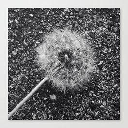 Dandelion in black and white Canvas Print