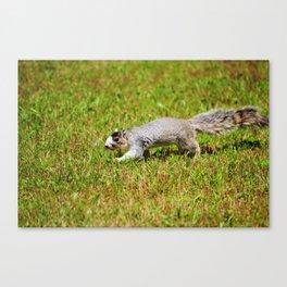 Southern Fox Squirrel Canvas Print