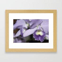 Orchids 2 Framed Art Print