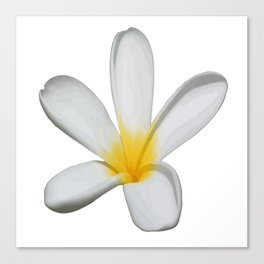 A Single Plumeria Flower Isolated Canvas Print