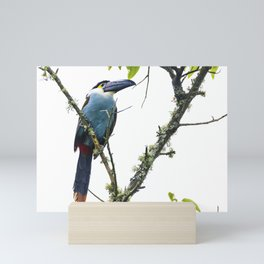 Tucan of the Andes Mini Art Print