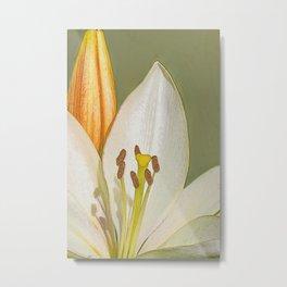 White Lily and Bud (Digital Art) Metal Print