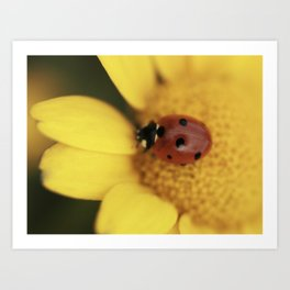 Ladybug on yellow flower - macro still life - fine art photo for interior design Art Print
