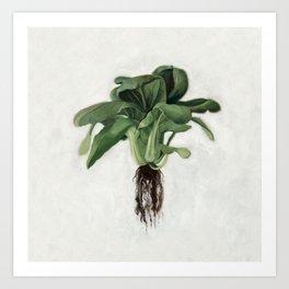 Bok Choy Oil Painting Art Print
