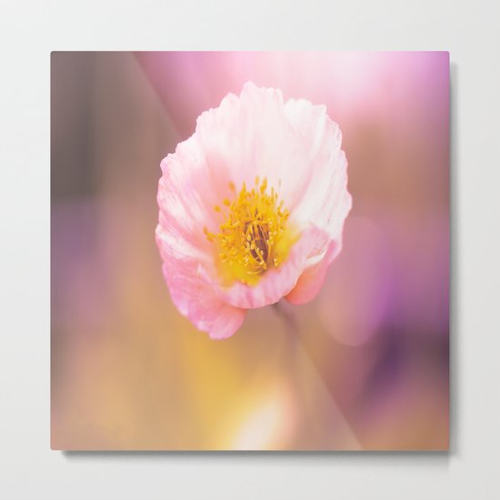 Pink poppy on a purple background with bokeh - colorful nature Metal Print