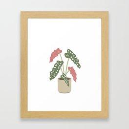 Begonia Maculata Framed Art Print