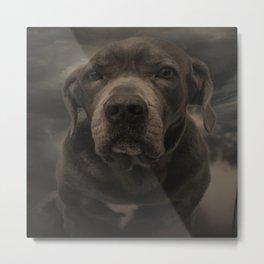 Dog face Metal Print