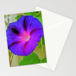 Morning Glory Flower Stationery Cards