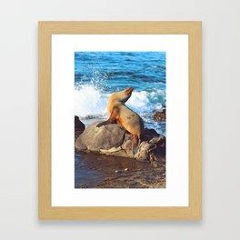 SeaLion Mermaid Framed Art Print