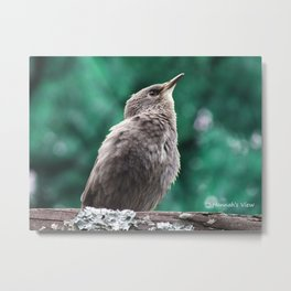 A Baby Mockingbird Metal Print