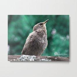 A Baby Mockingbird Metal Print