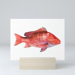 Red Snapper Mini Art Print